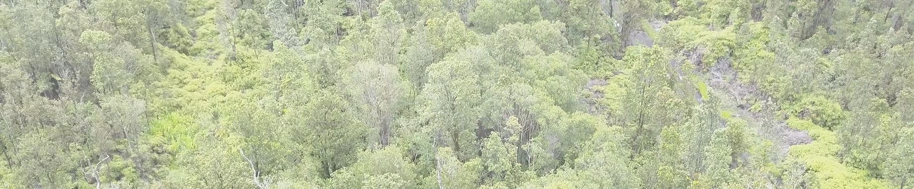 forest aerial2