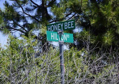 Honey Bee Lane (1)