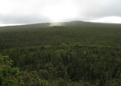 wao kele o puna forest reserve